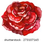 watercolor red rose. | Shutterstock .eps vector #273107165