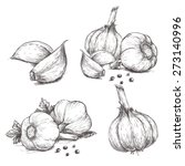 vector hand drawn set of garlic....