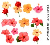 collection of colored hibiscus... | Shutterstock . vector #273148466