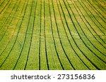 Green Field  In Picardy  Franc...