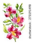 alstroemeria flower plant... | Shutterstock . vector #273191498