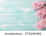 Fresh Pink Flowers Hyacinths In ...