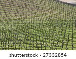 Attractive vineyard before the leaves sprout in Central California - stock photo