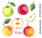 Apples Painted With Watercolor...