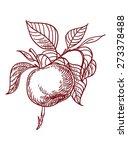 vector sketch of apple | Shutterstock .eps vector #273378488