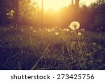 dandelion flowers in sunset | Shutterstock . vector #273425756
