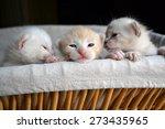 Stock photo three very small tiny kittens peeking out of a basket 273435965