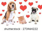 Cute Pets On Light Background...