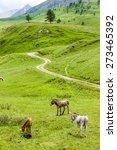 Donkeys  Landscape Of Piedmont...