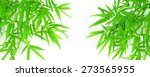 Green Bamboo Leaves On A White...