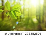 forest trees leaf. nature green ... | Shutterstock . vector #273582806