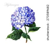 Watercolor Blue Hydrangea. ...