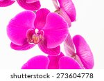 purple phalaenopsis orchids... | Shutterstock . vector #273604778