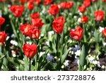 red tulips in park | Shutterstock . vector #273728876