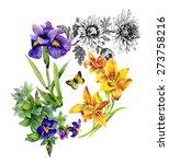 Garden Lily  Iris  African...