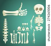 set of vector human bones | Shutterstock .eps vector #274265006