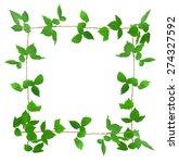 ivy plant | Shutterstock . vector #274327592