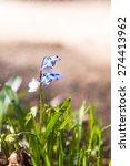 spring flowers | Shutterstock . vector #274413962