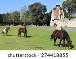 New Forest Ponies Grazing By...
