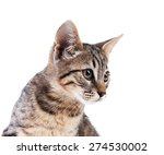 Stock photo cute kitten isolated on white 274530002