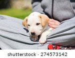 mixed breed adorable cute... | Shutterstock . vector #274573142