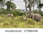 two african elephants walk out... | Shutterstock . vector #27486436