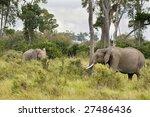 two african elephants walk out... | Shutterstock . vector #27486436