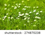 White Small Daisies In The...