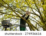Tree Pruning By A Man With A...