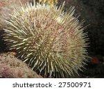 A Close Up Of A Green Urchin...
