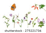 different flowers on white | Shutterstock . vector #275221736
