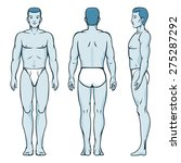 man body model. front  back and ...   Shutterstock .eps vector #275287292