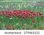 red tulips | Shutterstock . vector #275463122