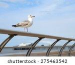Gull Perched On A Rail
