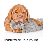 Stock photo sad bordeaux puppy hugs sleeping cat isolated on white background 275492405