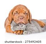 Stock photo sad bordeaux puppy hugs sleeping cat isolated on white background 275492405