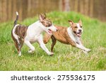Stock photo two dogs playing in summer 275536175