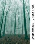 fantasy forest in the fog in... | Shutterstock . vector #275557706
