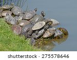 Family Of Water Turtles In Th...