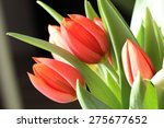 Red Tulips. Red Tulips On...