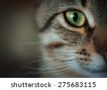 closeup of tabby cat face.... | Shutterstock . vector #275683115