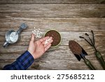 A Gardener Planting Seeds In A...
