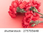 three flower  red carnations on ... | Shutterstock . vector #275705648