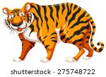 Standing Tiger On White...