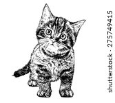 little cat hand drawn isolated... | Shutterstock .eps vector #275749415