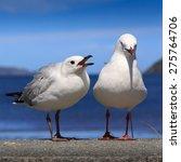 Wild Seagulls On A Beach