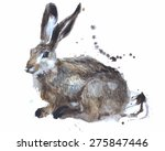 watercolour rabbit. hand...