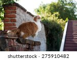 Stock photo golden cat simon jumping on roof 275910482