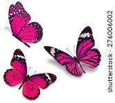 three pink butterfly  isolated... | Shutterstock . vector #276006002