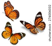 Stock photo three monarch butterfly isolated on white background 276006032
